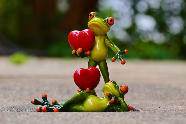 Free Photo Frogs Pair Love ValentineS Day Free