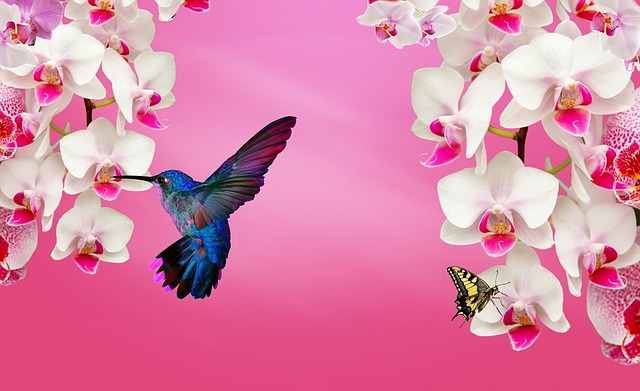 Hd Niagara Falls Wallpaper White Orchid Pink 183 Free Image On Pixabay