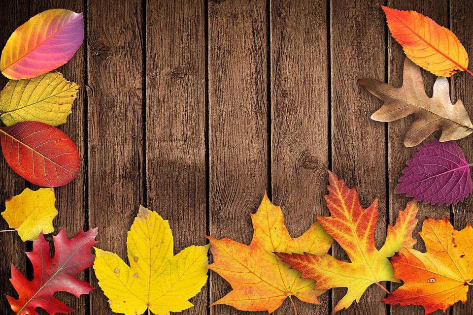 Landscape And Borders Thanksgiving Backgrounds