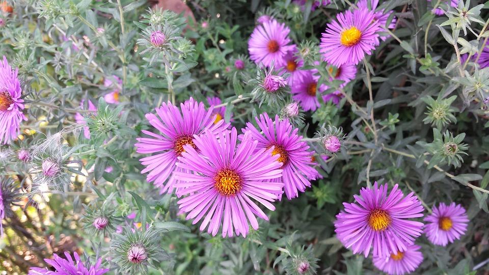 Blumen September Blumenstrau  Kostenloses Foto auf Pixabay