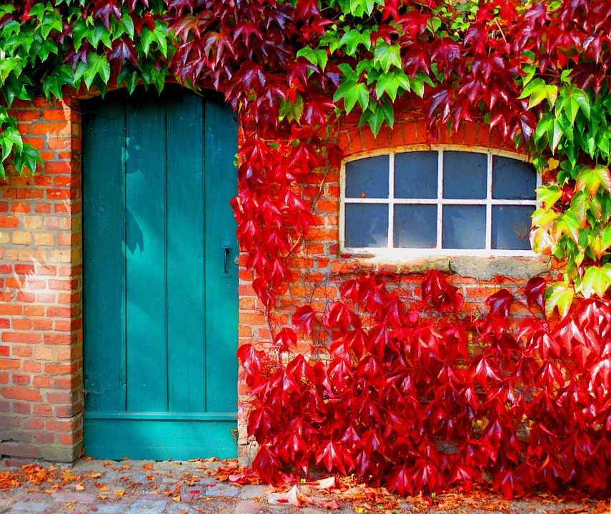 Hd Vector Wallpapers Free Download Autumn Leaves Colorful 183 Free Photo On Pixabay