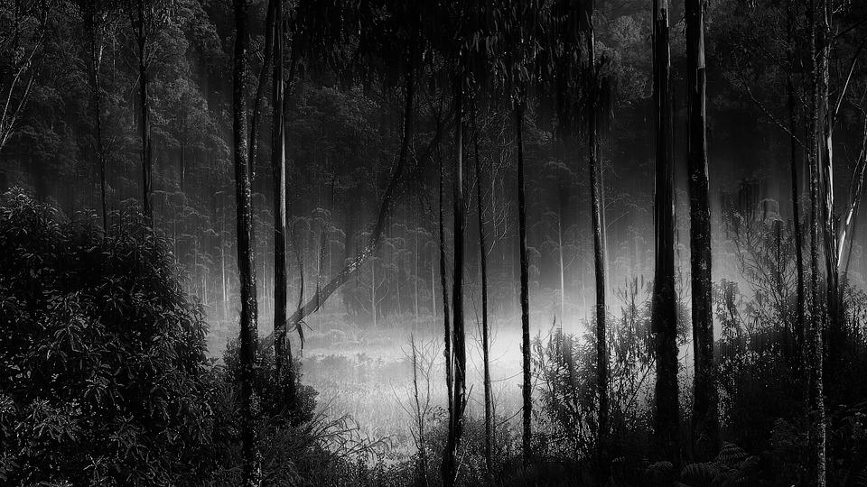 Gloomy Fall Wallpaper Forest Fog Misty Camping 183 Free Photo On Pixabay