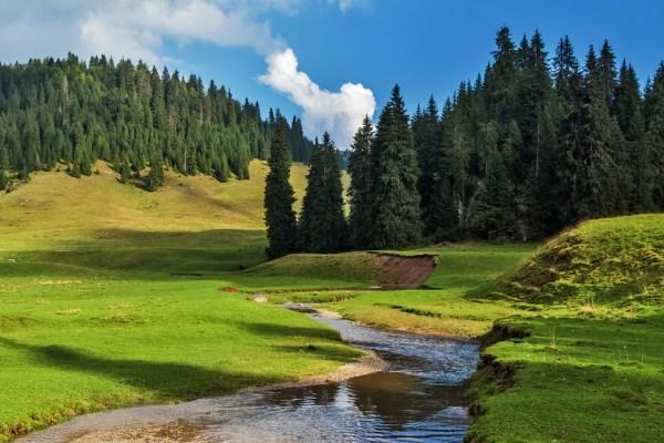 landscape nature forest free