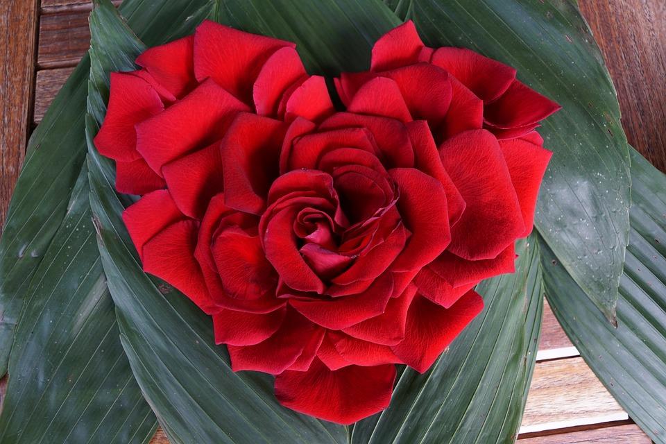 Rose, Heart, Love, Flower, Red, Form, Postcard, Flowers