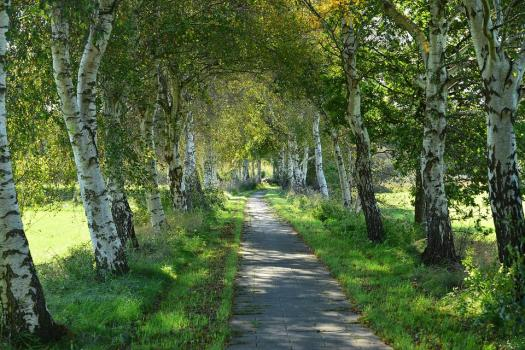 Via, Sentiero, Natura, Paesaggio, Lungomare, Albero