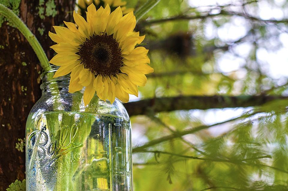 Free photo Sunflower Mason Jar Ball Jar  Free Image on