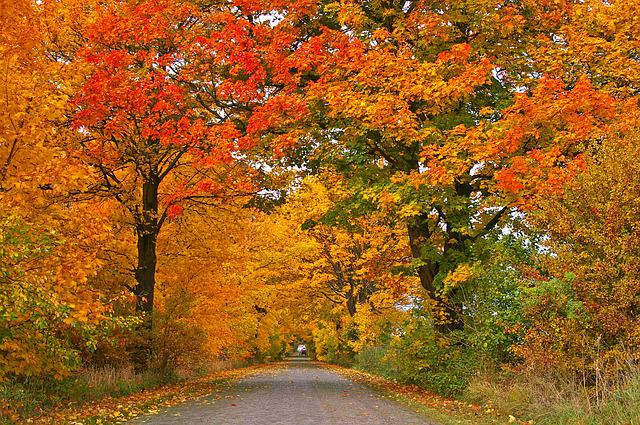 Wallpaper Images Of Fall Trees Lined Lake Free Photo Autumn Avenue Trees Away Road Free Image