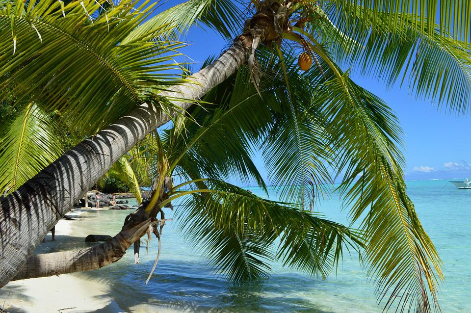 Fitness Girl Iphone Wallpaper Bora Beach Paradise 183 Free Photo On Pixabay