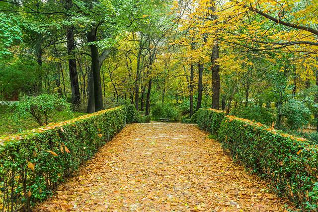 Fall Leaves Computer Wallpaper Free Photo Autumn Green Garden Nature Free Image On