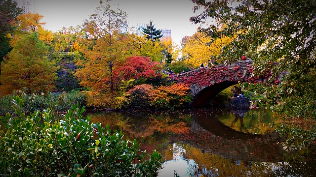 Vector Wallpaper Fall Colors Free Photo Bridge Nyc Usa Central Park Free Image On
