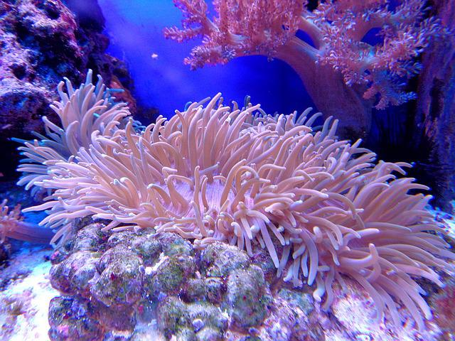 Reefs Plant Coral Life