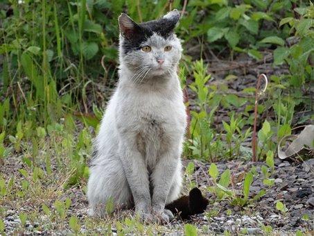 猫, 動物, 子猫, 外観, 飼い猫, ホームレス