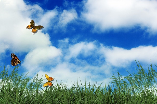 Free photo Rush Butterflies Clouds Sky  Free Image on