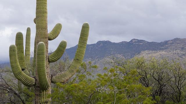 Cute Coffee Wallpaper Free Photo Cactus Foe So Cute Tucson Free Image On