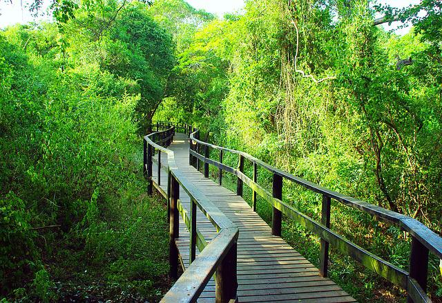 Free photo South Africa Bridge Forest  Free Image on