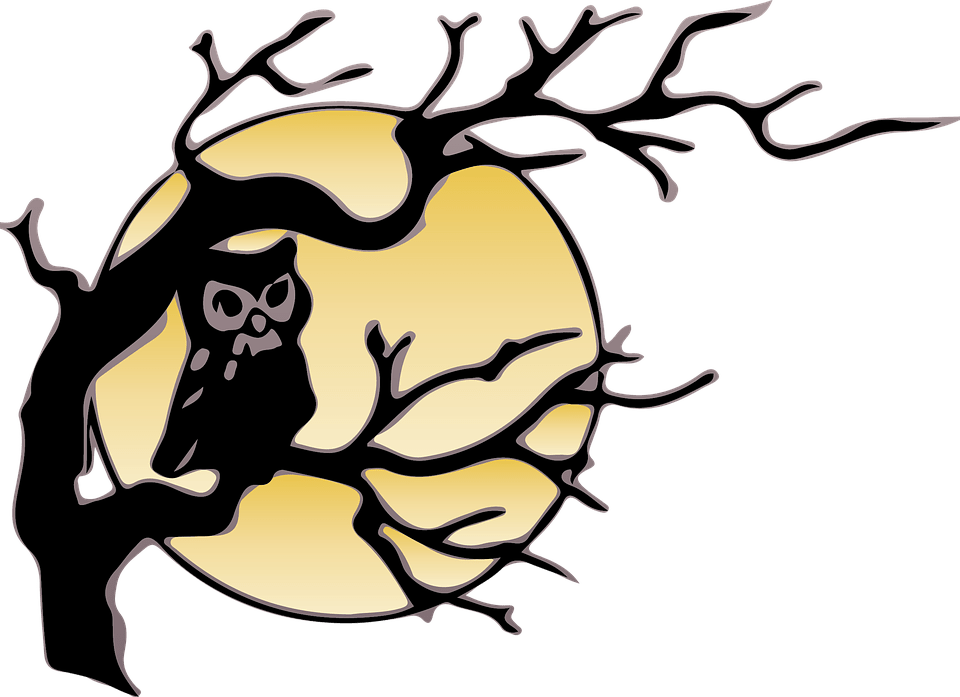 Owl Moon Night  Free image on Pixabay