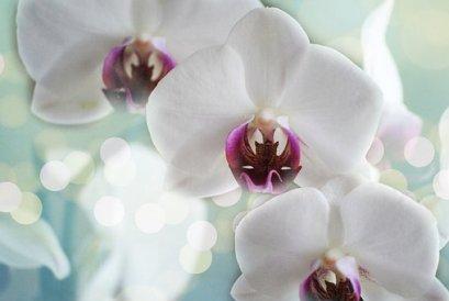 Orkidéer, White, Blomma, Natur, Tropiska