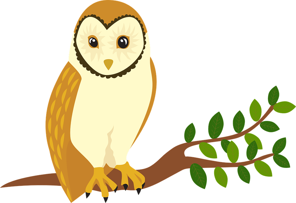 Owl Forest Animal  Free vector graphic on Pixabay