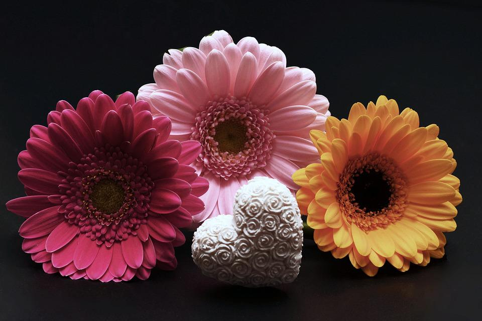 Free Photo Gerbera Flowers Heart Free Image On