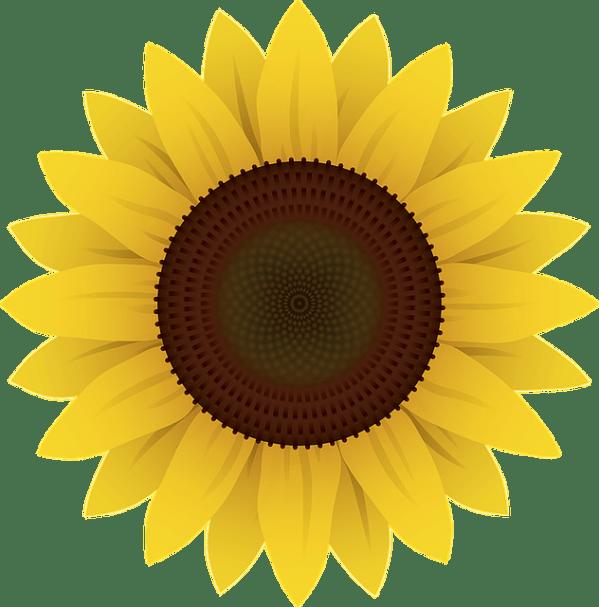 flowers sunflower plants free