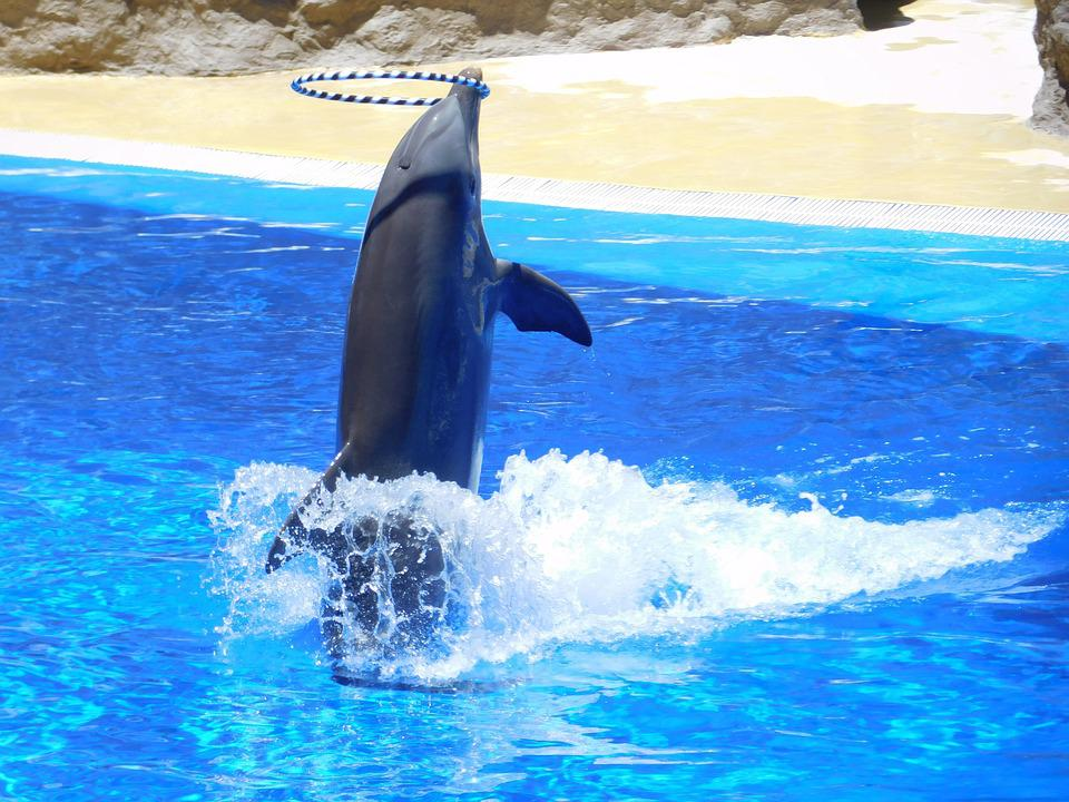 Free Animal Wallpaper Download Free Photo Dolphins Water Jump Water Park Free Image