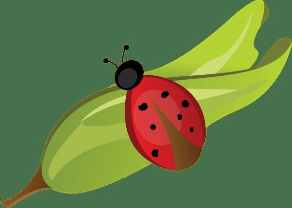 ladybug leaf red free vector