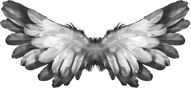 Falling Feathers Wallpaper Angel Wings Feather 183 Free Photo On Pixabay