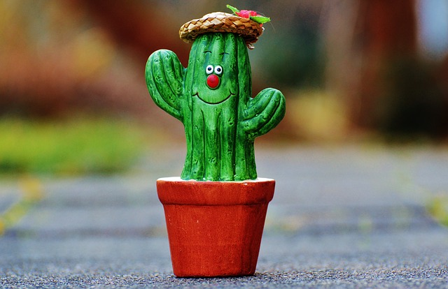 Cute Medical Wallpaper Free Photo Cactus Straw Hat Face Funny Free Image On