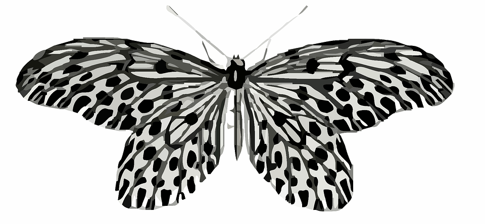 Butterfly Clip Art Colorful Free Image On Pixabay