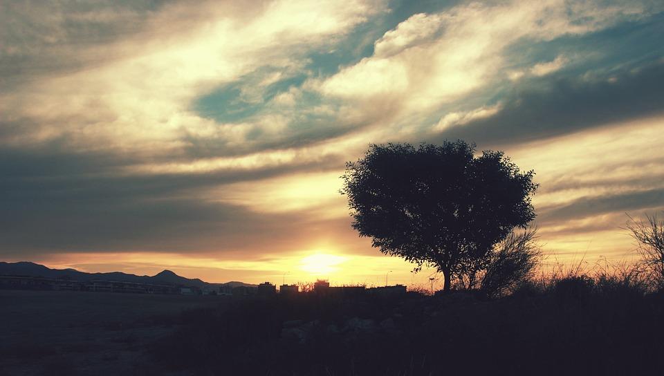 夜明け, 明日, 日, スペイン, マラガ, アンダルシア, 雲, 空, ツリー, 自然