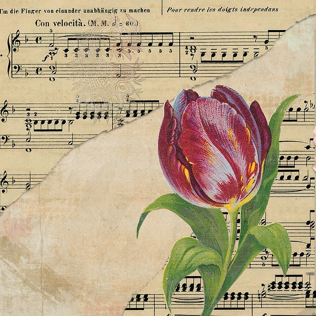 Tulip Background Music Sheet  Free image on Pixabay