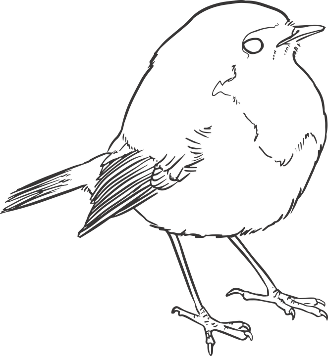 Bird Lineart Lines · Free vector graphic on Pixabay