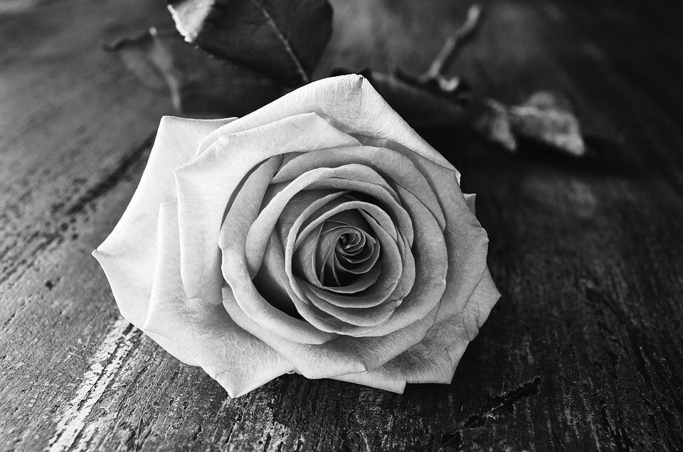 600 free black rose
