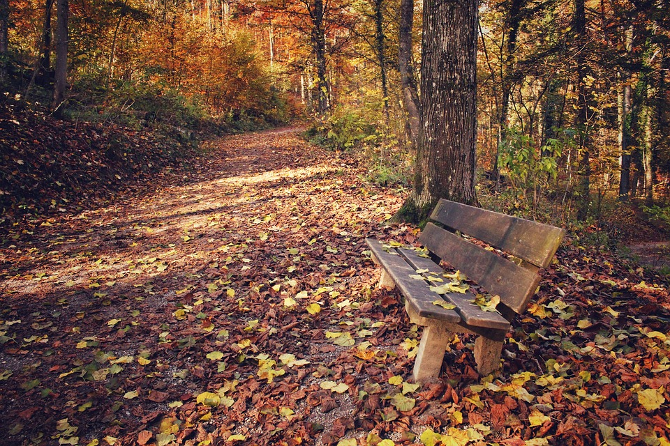 Fall Woodsy Pc Wallpaper Free Photo Park Park Bench Leaves Leaf Free Image On