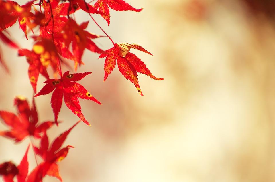 Free Fall Harvest Wallpaper 단풍 메이플 가을 183 Pixabay의 무료 사진