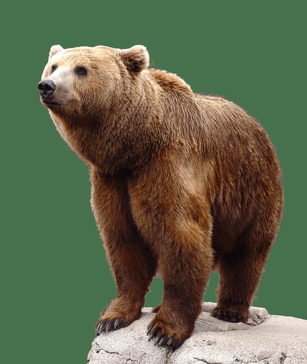 Wild Brown Bear · Free Photo On Pixabay
