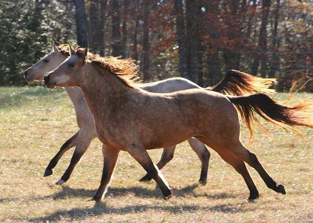 Free photo Farm Horse Wild Horses Running  Free Image