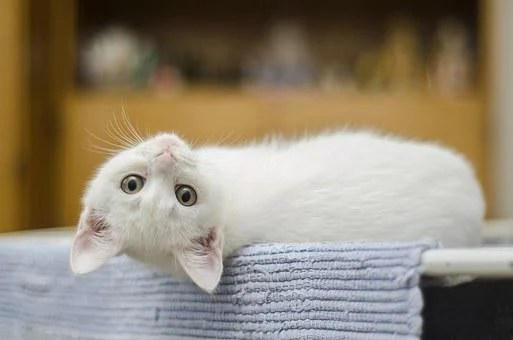 20 000 cat pictures