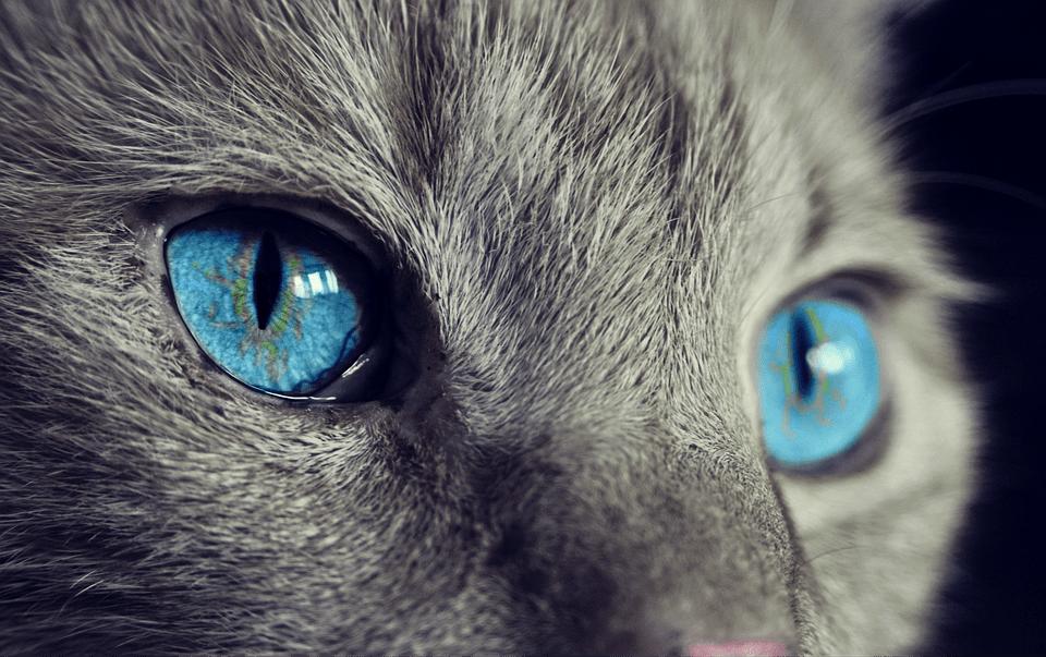 cat animal cat s