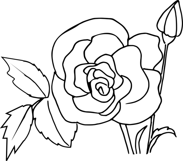 Free vector graphic: Rose Coloring, Flower, Hand Drawing