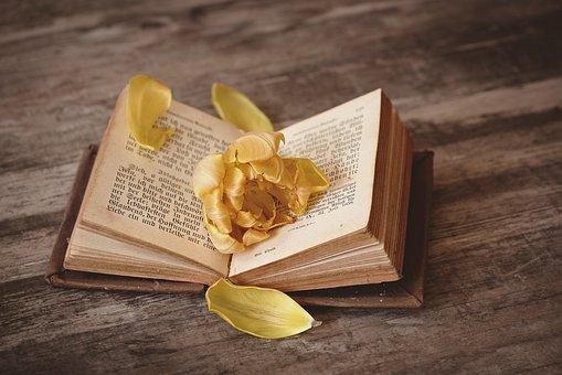 Buch, Offen, Aufgeschlagen, Buchseiten