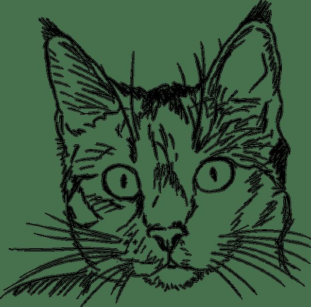 cat kitten drawing black