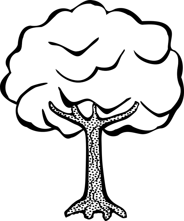 Plant Tree · Free vector graphic on Pixabay