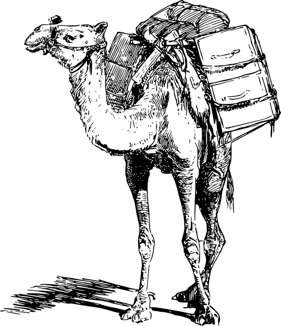 Free vector graphic Animal Burden Camel Laden  Free