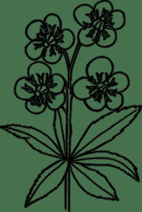 Flower Plant Wild · Free vector graphic on Pixabay