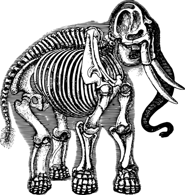 Free vector graphic: Anatomy, Animal, Biology, Elephant