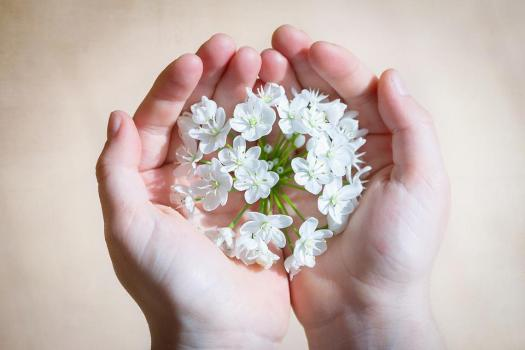 Fiore, Bianco, Fiori Bianchi, Fiore Di Porro, Le Mani