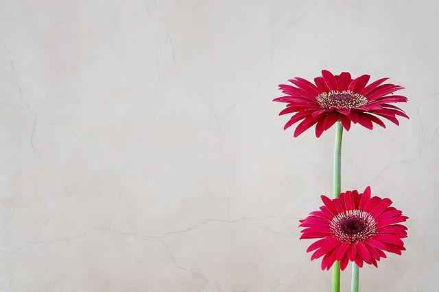 Free Photo Gerbera Flower Flowers Pink Red Free