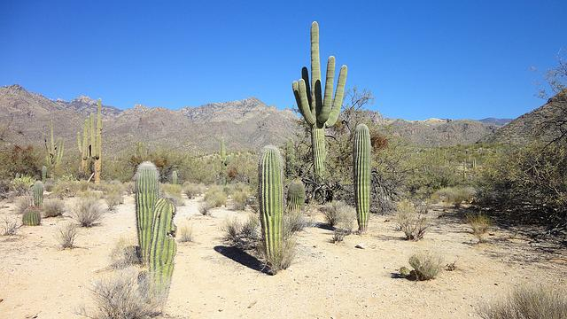 Photo gratuite Dsert Cactus Arizona Tucson  Image