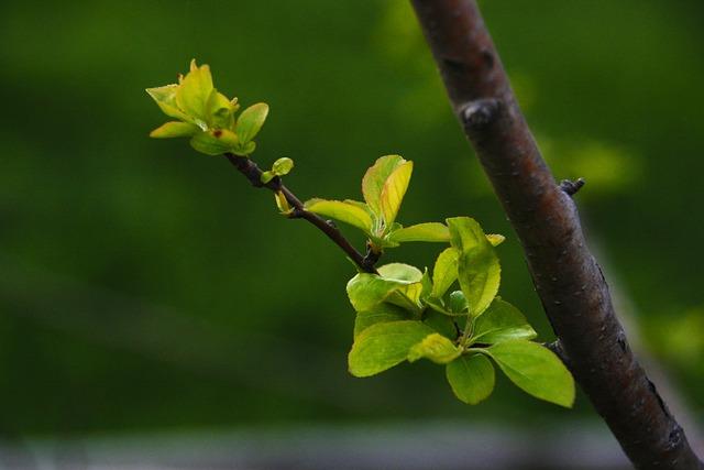 A New Leaf Flower Apples Bud The  Free photo on Pixabay